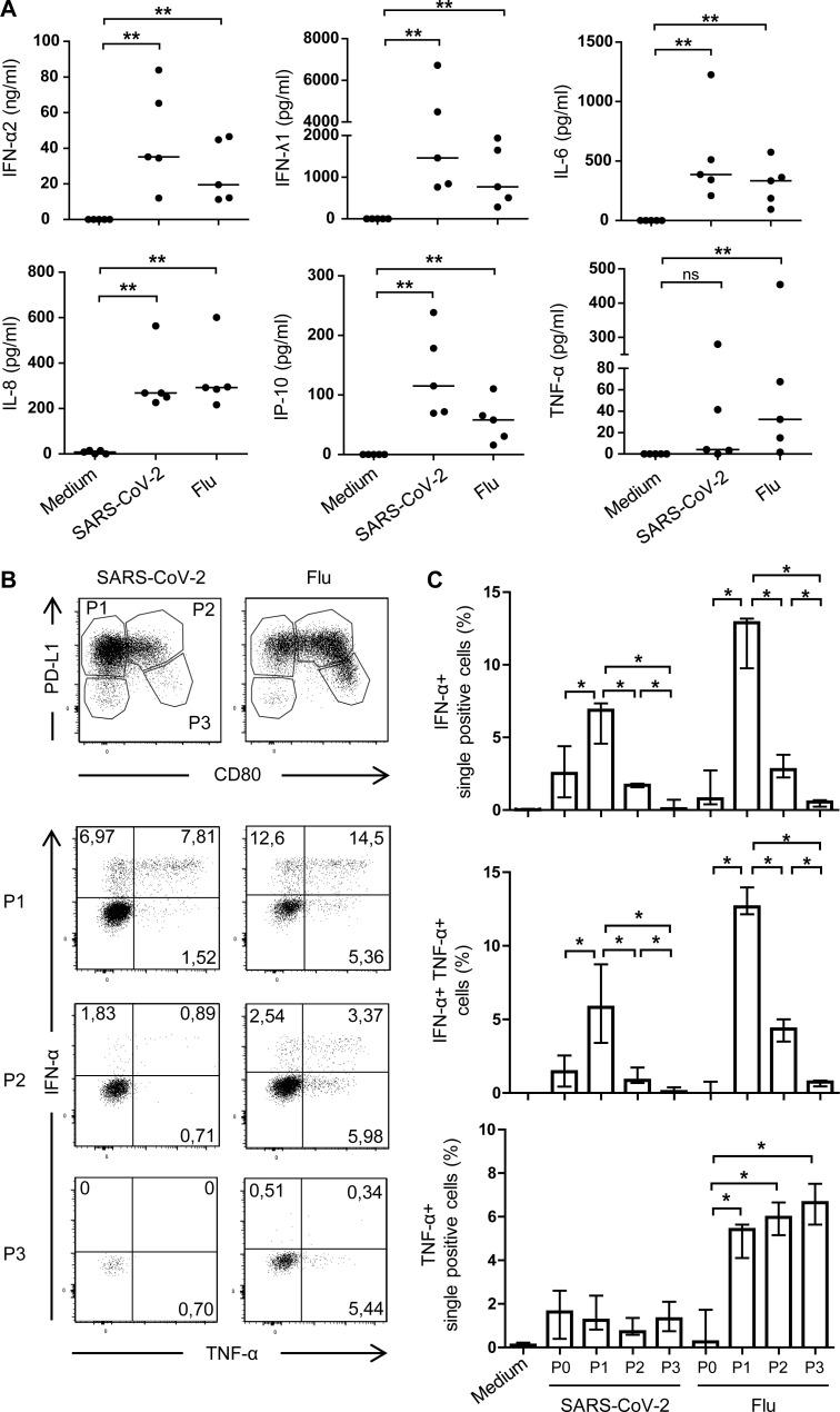SARS-CoV-2–activated pDCs produce pro-inflammatory cytokines. Sorted blood pDCs from healthy donors were cultured for 24 h with medium, Flu, or SARS-CoV-2. (A) Quantification of secreted pro-inflammatory cytokines after 24 h of culture. Bars represent medians of n = 5 healthy donors from three independent experiments. (B) Dot plot showing pDC activation through the expression of PD-L1 and CD80 (upper plots), and intracellular IFN-α and TNF-α in P1, P2, or P3 populations (lower plots). Results from one healthy donor representative of n = 4. (C) Percentages of IFN-α single-positive, IFN-α + TNF-α + double-positive, and TNF-α single-positive cells in P0, P1, P2, or P3 populations. Histograms represent medians and bars interquartile ranges of n = 4 healthy donors from three independent experiments. *, P