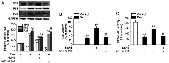 Impact of sirt1 siRNA on the protective role of NaHS against Dex-induced damage and senescence in osteoblastic MC3T3-E1 cells. Osteoblasts were transfected with control siRNA or sirt1 siRNA for 24 h, then subjected to treatment with vehicle; Dex and vehicle; or NaHS for 48 h. (A) Cell viability and (B) ALP activity as well as changes in the (C) mRNA and protein expression levels of sirt1 were assessed. Data are shown as the mean ± SEM (n=4). ** P