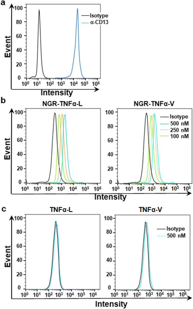 Binding of TNFα proteins to <t>CD13-expressing</t> HT1080 cells. a Expression of CD13 in HT1080 cells indicated by flow cytometry with an antibody against CD13 (α-CD13). b,c Binding of TNFα proteins to HT1080 cells. FAM-labeled TNFα proteins (100–500 nM) were incubated with HT1080 cells for 1 h at room temperature prior to flow cytometry analysis