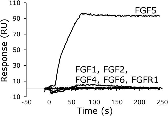Specificity of F5f1 aptamer binding to FGF5. After immobilization of F5f1 aptamer on the sensor chip, 100 nM human FGF5, other human FGF family members, or extracellular domain of human FGFR1 was injected with four equivalents of low-molecular-weight heparin.