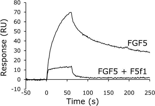 Competitive inhibition of the binding of FGF5 to FGFR1 by the F5f1 aptamer. After immobilization of the extracellular domain of human FGFR1 on the sensor chip, a mixture of 100 nM human FGF5 and 100 nM <t>low-molecular-weight</t> <t>heparin</t> was injected with or without 200 nM F5f1 aptamer.