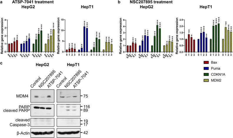 Prolonged MDM4 inhibition with ATSP-7041 and NSC207895 lead to upregulation of p53 activity and downstream signaling. ( a ) Bar graphs representing normalized mRNA expression of p53 targets Bax , Puma , CDKN1A , and MDM2 analyzed with qPCR experiments. RNA extracted from HepG2 and HepT1 cells treated with the indicated concentrations of ATSP-7041 for 48 h was compared to that from untreated cells (0 h). Error bars represent SD. Data shown are representative of at least three independent experiments performed with three replicate wells each time. Student's t test (two tailed) * P