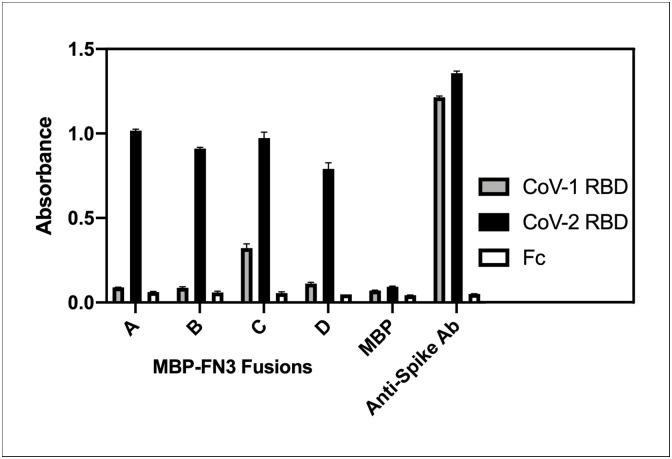 Specificity of anti-RBD monobodies. The four MBP-FN3 fusions were adsorbed on microtiter plate wells and incubated with chemically biotinylated SARS-CoV-1 and SARS-CoV-2 RBD proteins mixed with a bacterial cell lysate. Wells coated with MBP alone served as a negative control and wells coated with an anti-spike monoclonal antibody, clone CR3022 [ 35 ], which binds equally well to the RBDs of both SARS-CoV-1 and SARS-CoV-2, served as a positive control. Binding of SARS-CoV-1 and SARS-CoV-2 RBD-Fc fusion proteins was revealed with streptavidin-HRP. Error bars represent standard error (SE) of triplicate measurements.