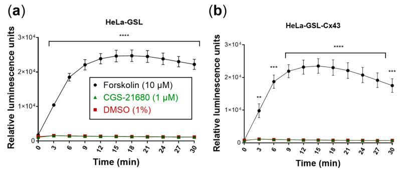 Evaluation of the biosensor cells. Forskolin (10 µM) was used as a positive control and DMSO (1%) as a negative control. Means ± SEM of three individual experiments performed in duplicates are given. ( a ) Biosensor cells produced luminescence only in response to forskolin (10 µM). Luminescence response to CGS-21680 (1 µM) was not different from control (DMSO). ( b ) Cx43 transfection of biosensor (HeLa-GSL) cells did not affect luminescence responses. Statistical significance calculated with repeated measures 2-way ANOVA and Dunnet's multiple comparisons test comparing treatments to control (DMSO, 1%). ** p