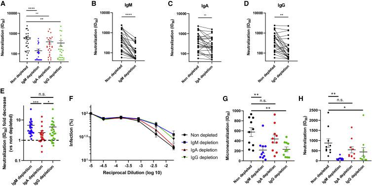 Role of IgM, IgA, and IgG in neutralization (A) Comparison of the SARS-CoV-2 pseudoviral inhibitory dilution (ID 50 ) of all plasma samples. (B–D) ID 50 of plasma from each convalescent donor before and after IgM (B), IgA (C), and IgG (D) depletion. (E) Fold decrease (isotype-depleted versus non-depleted plasma) in ID 50 measured by SARS-CoV-2 pseudoviral particle neutralization. (F and G) Microneutralization assay with infectious wild-type SARS-CoV-2 performed on non-depleted and isotype-depleted plasma from 10 donors. Mean percentage of infection (F) and ID 50 observed from plasma from the 10 donors (G). (H) ID 50 obtained with the pseudoviral particle neutralization assay for the samples in (F)–(G). Asterisks indicate the level of statistical significance obtained by a Wilcoxon signed rank test. n.s., not significant. ∗ p