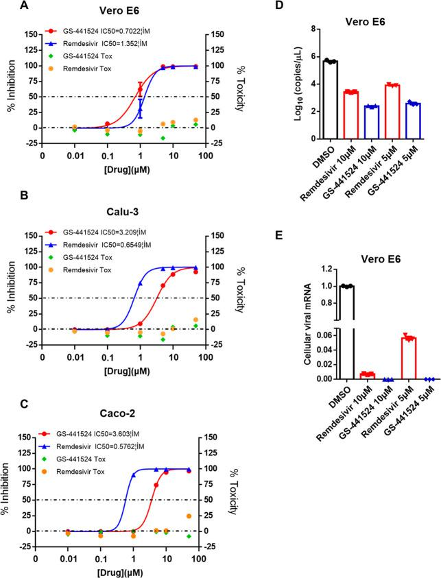Remdesivir and GS-441524 potently inhibit SARS-CoV-2 replication in vitro. Vero E6 (A), Calu-3 (B), and Caco-2 (C) were infected with SARS-CoV-2 at an MOI of 0.05 and treated with dilutions of either GS-441524 or remdesivir (0, 0.01, 0.1, 1, 5, 10, 50 μM) for 48 h. Viral yield in the cell supernatant was then quantified by qRT-PCR. Data represented are the mean value of % inhibition of SARS-CoV-2 in cells. Cytotoxicity of GS-441524 (green dots) and remdesivir (orange dots) was determined using a CCK-8 test. Vero E6 cells were infected with SARS-CoV-2 at an MOI of 0.05 and treated with dilutions of the indicated compounds for 48 h. Viral RNA in the cell supernatant (D) and pellet (E) was then quantified by qRT-PCR.