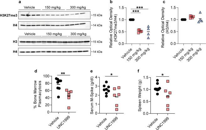 EZH2 inhibition significantly reduced tumour burden in mice bearing 5T33MM multiple myeloma. a Western blot against H3K27me3 and total histone H3 (H3) of bone marrow plasma cells derived from 5T33MM mice treated with 150 or 300 mg/kg of UNC1999, or with vehicle. Total histone H4 (H4) was used as a loading control. Corresponding uncropped western blots can be found in Supplementary Fig. 9a–b . b Signal quantification of the western blot against H3K27me3 shown in ( a ). c Signal quantification of the western blot against H3 shown in ( a ). The optical density in ( b – c ) was normalized against H4. n (Vehicle) = 4, n (150 mg/kg) = 5 and n (300 mg/kg) = 4. Statistical analysis in ( b – c ) was performed with one-way ANOVA. Values: mean with SEM. d – f 5T33MM mice were treated with 200 mg/kg of UNC1999 or with vehicle. Tumour load was determined by d bone marrow plasmacytosis, e M-spike levels and f spleen weight. n (Vehicle) = 8, n (UNC1999) = 6. Statistical analysis in ( d – f ) was performed with one-sided t -test. Values: mean with SEM. * p