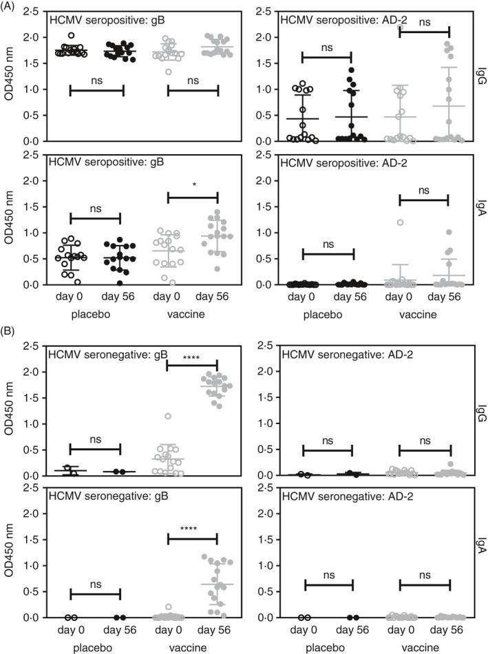 gB vaccination induces IgG and IgA responses to gB and AD‐2 in sero‐positive recipients. Serum samples obtained from the recombinant gB vaccination trial were analysed for IgG and IgA binding to gB and AD‐2 by ELISA. Individuals were stratified into (A) sero‐positive (IgG+to gB) and (B) sero‐negative (IgG‐ to gB). Statistical differences between the mean OD values of day 0 and 56 of vaccine recipients for IgG and IgA for binding to gB and AD‐2 epitope were obtained from the Mann–Whitney test (ns, not significant; * P