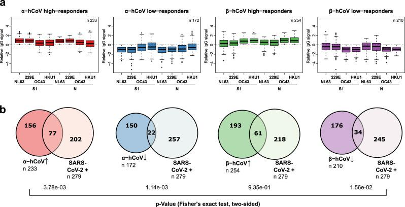 Analysis of seasonal hCoV high and low responders. a From the entire study population, groups of α- or β-hCoV high and low responders were built as indicated. High responder were defined as samples with above average MFI values for S1 and N-specific IgGs of the respective hCoV clade. Low responders were defined with below MFI values, correspondingly. Responder groups (i) α-hCoV ↑, red, n = 233, (ii) β-hCoV ↑, green, n = 254, (iii) α-hCoV ↓, blue, n = 172 (iv) β-hCoV ↓, purple, n = 210 are shown as Box-Whisker plots of log-transformed and per-antigen scaled and centered MFI values across hCoV N and S1 antigens. Box represents the median and the 25th and 75th percentiles, whiskers show the largest and smallest values. Outliers determined by 1.5 times IQR are depicted as circles. b The over- or under-representation of SARS-CoV-2 responders (SARS-CoV-2 + , n = 279, as determined by positive MultiCoV-Ab classification) within the four sample groups is visualized in Venn diagrams, stochastic significance was calculated using Fisher's exact test (two-sided). Source data are provided as a Source Data file.