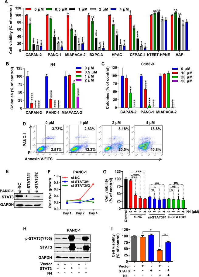 N4 suppresses pancreatic cancer cell proliferation and migration and induces apoptosis. A Pancreatic cancer cells (CAPAN-2, PANC-1, MIAPACA-2, BXPC-3, HPAC, and CFPAC-1) and normal cells (HPNE, HAF) were incubated with the indicated concentration of N4 for 48 h. MTS assays were performed to detect the N4-mediated inhibition of cell proliferation. Data are shown as mean ± SD, * P