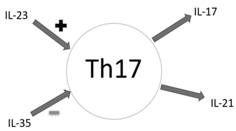 Effects of selected cytokines on Th17 cells—schematic diagram (IL-17—interleukin 17, IL-21—interleukin 21, IL-23—interleukin 23, IL-35—Interleukin 35, '+'—promoting effect, '-'—inhibitory effect, Th17—Th17 lymphocytes).