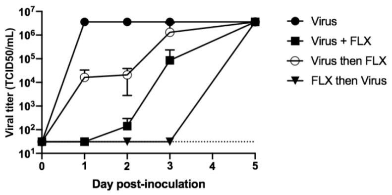 Levels of infectious particles in cell cultures treated with fluoxetine (FLX) before, during, or after inoculation of SARS-CoV-2. Vero E6 cells were seeded in 24-well plates at 10 5 cells per well. The cells were inoculated with SARS-CoV-2 (black circles), SARS-CoV-2 + 10 μM of FLX (black squares), or SARS-CoV-2 incubated for 2 h and then treated with 10 μM of FLX (white circles), or the cells were incubated for 2 h in presence of 10 μM of FLX, followed by inoculation with SARS-CoV-2 and incubation for 2 h (black triangles). For each condition, the MOI was 0.01 and the cells were washed three times with complete medium after incubation and then treated again with 10 μM of FLX, followed by re-incubation. Levels of infectious particles in supernatants were determined using the endpoint dilution assay at days 1, 2, 3, 5 post-infection. The Spearman–Karber method was used to determine the tissue culture 50% infectious dose (TCID 50 /mL). The results are presented as the mean ± SD of three independent experiments.