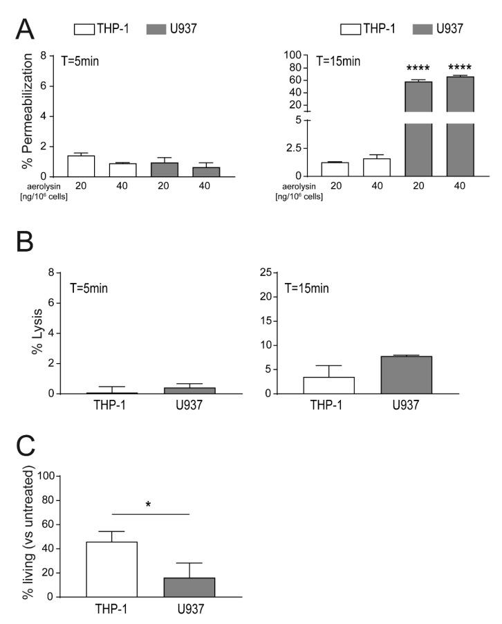Enhanced permeabilization to aerolysin treatment of U937 versus THP-1 cells. ( A ) Equal numbers of U937 and THP-1. cells were stimulated with increasing concentrations of aerolysin [ng/10 6 cells] and cell permeabilization was monitored using propidium iodide influx after 5 min (left panel) or 15 min (right panel) by FACS; ( B ) cells were stimulated with 20 ng aerolysin/10 6 cells and cell lysis after 5 min (left panel) and 15 min (right panel) were analyzed by FACS; ( C ) cells were stimulated with 2 ng aerolysin/10 6 cells for 30 min. Subsequently, the unbound toxin was removed, and the cells were recovered in full RPMI media for 24 h. Percentages of living cells at T = 24 h were assessed using the Alamar blue ® assay. Mean ± SEM is shown (n = 3, * p