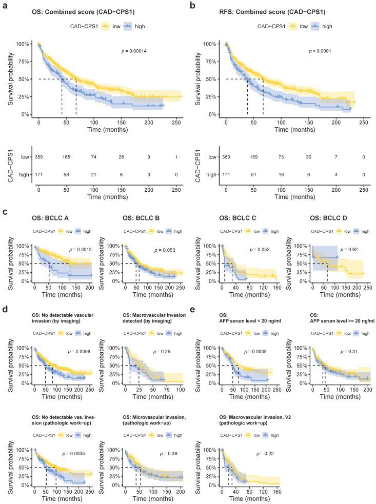 Combining the immunoreactive scores of CAD and <t>CPS1</t> improves prognostic prediction and is particularly predictive in early stage HCC without vascular invasion. ( a ) Kaplan–Meyer plot showing overall survival rates in patients with respect to a high or low combined CAD-CPS1 score. ( b ) Kaplan–Meyer plot showing recurrence-free survival rates in patients with respect to a high or low combined CAD-CPS1 score. ( c ) Analysis of overall survival in relation to BCLC stage (BCLC A, low: n = 76, high = 21; BCLC B, low: n = 216, high n = 122; BCLC C, low: n = 36, high n = 25, BCLC D, low: n = 31, high: n = 3). ( d ) Analysis of overall survival in relation to macrovascular invasion detected by preoperative imaging (upper two panels, no vascular invasion, low: n = 322, high: n = 144; with vascular invasion, low: n = 37, high: n = 27) and micro- and macrovascular invasion detected during pathologic work-up (lower three panels, V0, low = 259, high: n = 83; V1, low = 53, high = 56; V2, low: n = 47, high: n = 32). ( e ) Overall survival in relation to AFP serum level (AFP