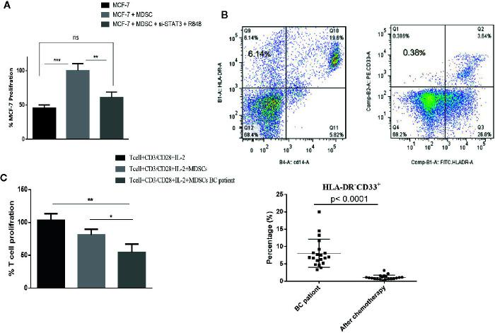 In patients with BC treated with chemotherapy, circulating MDSC levels are decreased, but their MDSCs remain highly T cell-suppressive. (A) In a co-culture experiment, treatment of MDSCs with the TLR7/8 agonist R848 and si-STAT3 reduces MCF-7 BC cells' proliferation. (B) The frequency of MDSCs in BC patients undergoing chemotherapy was assessed. The flow cytometric results showed that after chemotherapy (right), the circulating MDSC frequencies were decreased. (C) The MDSCs of patients with BC after chemotherapy still had more T cell-suppressive activity than HLA-DR - CD33 + MDSCs isolated from healthy individuals. *P