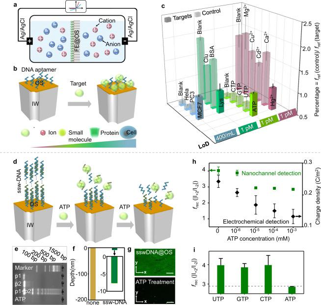 """Sensing performances of FE OS as probes. a A scheme showing the working mechanism of the sensor using FE OS as probes. b Capture process of multi-scale targets through designed single-stand DNA. c Sensitivity and selectivity of the DNA@OS (DNA is a designed sequence specifically bonding with targets) for the recognition of ions (Hg 2+ ), small molecules (ATP), protein (Lysozyme) and cells (MCF7). The selective detection of multiscale targets using FE OS was realized based on the change of f rec signal output induced by the surface charge at outer surface. LoD is defined as the limitation of detection for the targets. d Formation of """"supersandwich"""" DNA structure (ssw-DNA) with long concatamers through the successive hybridization of alternating DNA unit. And gradual disassembly of ssw-DNA based on interaction between ATP and the repeat DNA units through increasing ATP concentration. e Agarose gel electrophoresis characterizing of the ssw-DNA: 1) DNA marker; 2) p1; 3) p2 (ATP ampter); 4) p1 + p2; 5) target+p1 + p2. f Depth distribution of the """"supersandwich"""" DNA in nanochannel-system using ToF-SIMS. g Laser scanning confocal microscopy of the OS after the assembly (top) and the disassembly of ssw-DNA (bottom). The scale bar is 20 μm. h The LoD of ATP using ssw-DNA as probe based on nanochannel method and electrochemical method (Fig. S 30 ). i Specificity of ssw-DNA@OS for ATP, in contrast with other NTPs. For the sensing performances part, five sensors using FE@OS were established to obtain each error bar of sensitivity and specificity."""