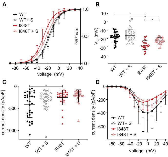 The nonspecific kinase inhibitor staurosporine reduces the hyperpolarized shift of the I848T mutation . A , voltage dependence of activation using 500 nM staurosporine, incubated for 20 min. Staurosporine reduces the hyperpolarized shift of the I848T mutation from −9.77 ± 1.45 to −6.67 ± 1.54 mV. B , V 1/2 of channel activation (ANOVA F = 25.67; WT versus I848T p