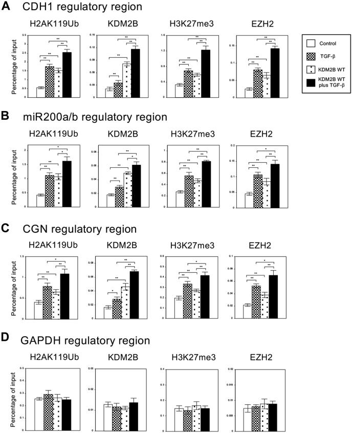 KDM2B influenced the regulation of histone H2A ubiquitination and H3 methylation on the regulatory regions of several epithelial marker genes in A549 cells. A549 cells were infected with the control retrovirus or the retrovirus expressing wild-type KDM2B (WT) with or without TGF-β treatment. ChIP analyses of H2AK119Ub, KDM2B, H3K27me3, and EZH2 on the regulatory regions of CDH1 ( A ), miR200a/b ( B ), CGN ( C ), and GAPDH genes ( D ) in A549 cells are shown. The occupancies of ubiquitinated histones, KDM2B, methylated histones or EZH2 proteins on the regions were analyzed by quantitative PCR. Percentage enrichment over input chromatin DNA was presented (n = 3) (∗∗ p