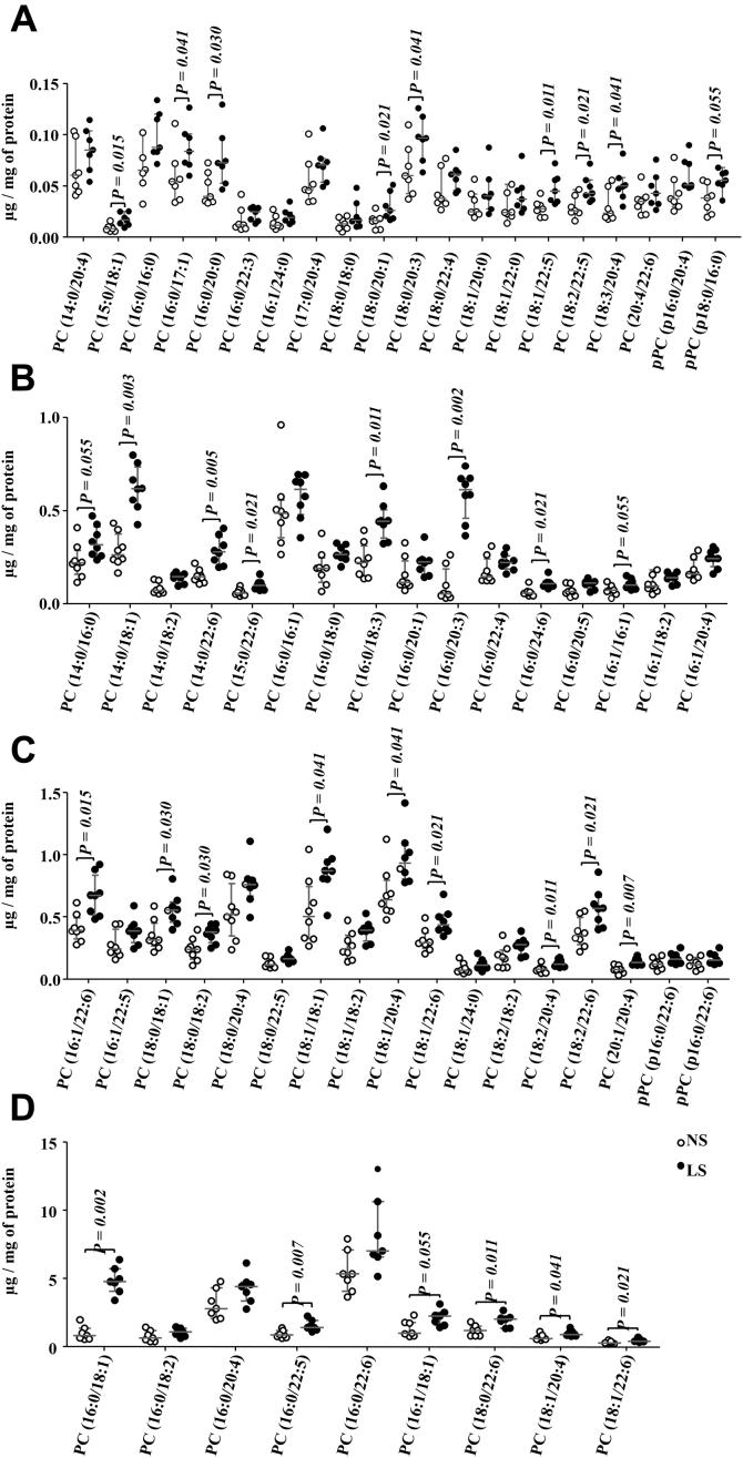 Phosphatidylcholine (PC) species identified in the gastrocnemius. The lipid extract of the gastrocnemius excised from LDLR KO male mice fed a normal (NS; n = 7) or low-sodium diet (LS; n = 7) was subjected to a global lipidomic analysis performed with high-resolution mass spectrometry, ultra-high-performance liquid chromatography coupled to mass spectrometry coupled to ESI-Q-TOF-MS. PC species were separated in panels A – D according to their size, A ) 0.0 to 0.15, B ) 0.0 to 1.0, C ) 0.0 to 1.5 and D ) 0.0 to 15 μg/mg of protein. Values expressed as median (interquartile range) were compared by the Mann–Whitney test.