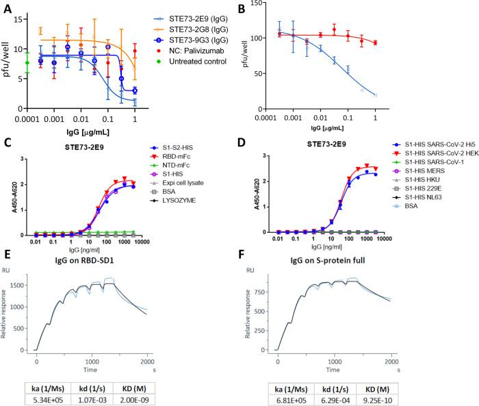 Characterization of the neutralizing antibody STE73-2E9 in IgG format. A Neutralization of 20–30 pfu SARS-CoV-2 by STE73-2E9, -9G3, and -2G8. Palivizumab was used as isotype control. B Validation of neutralization potency of STE73-2E9 using 100 pfu. Neutralization assays were performed in triplicates, mean ± s.e.m. are given. C Titration ELISA on the indicated antigens. ELISA shows single titration of two representative experiments (see also Supplementary Fig. 7 ). D Cross-reactivity to other coronavirus spike proteins analzyed by ELISA. S1-HIS SARS-CoV-2 Hi5 was produced in house. S1-HIS SARS-CoV-2 HEK and all other coronavirus S1 domain proteins were obtained commercially. ELISA experiments were performed in duplicate and the mean values are given. E , F Kinetic parameter determination through single-cycle kinetic titration SPR of STE73-2E9 IgG on HEK cell produced RBD-SD1 and S1-S2, respectively (concentrations: 200, 100, 50, 25, 12.5, 6.25 nM).