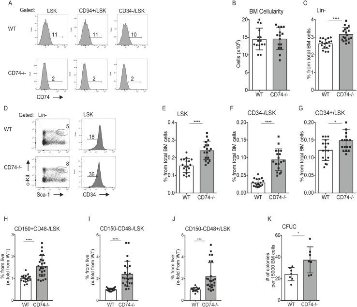 Expansion of HSPCs in the BM of CD74 −/− mice. (A) BM cells derived from WT or CD74 −/− were purified. Histograms show representative analysis of CD74 expression on HSPCs in WT and CD74 −/− mice. n = 3. (B) Total BM cellularity per femur and tibia in WT and CD74 −/− mice, Data A in S1 Data . (C–J) The percent of the different populations in WT and CD74 −/− -derived BM cells. (C) Lin-; Data B in S1 Data (D) Representative FACS analysis of WT and CD74 −/− HSPCs; (E) LSK; Data C in S1 Data (F) CD34-/LSK; Data D in S1 Data and (G) CD34+; Data E in S1 Data (H) CD150+CD48-LSK; Data F in S1 Data (I) CD150-CD48-/LSK; Data G in S1 Data and (J) CD150-CD48+/LSK; n = 14–18, Data H in S1 Data . (K) CFUC assay: Total BM cells from WT and CD74 −/− mice were seeded at 15,000 cells/mL in semisolid cultures supplemented with cytokines and nutrients. CFU-C were counted 7 days later; n = 7, Data I in S1 Data . Bars show SEM. Unpaired two-tailed t test * p