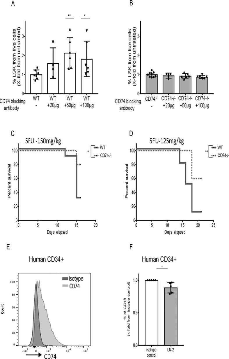 CD74 can serve as a potential target for therapy. (A, B) WT and CD74 −/− BM cells were cultured alone or incubated with blocking anti-CD74 antibody (20, 50, and 100 μg/ml). After 48 h, percent LSK from live cells was analyzed by FACS; n = 4–7, Data A and B in S8 Data . (C, D) Survival curve: 5-FU (150 mg/kg and 125mg/kg) was injected to WT and CD74 −/− mice once a week. Log-rank test *