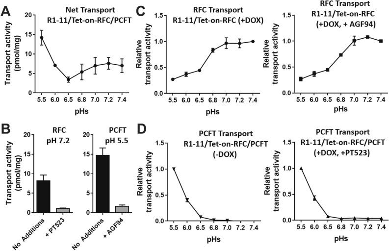 Transport pH profiling of R1-11/Tet-on-RFC single and R1-11/Tet-on-RFC/PCFT double models. R1-11/Tet-on-RFC or R1-11/Tet-on-RFC/PCFT cells were plated in 60-mm dishes in <t>complete</t> FF RPMI 1640 medium containing 10% FBS. Twenty-four hours later, DOX was added at 10 ng/ml. After 48 h, transport was measured over 2 min at 37 °C with [ 3 H]MTX (0.5 µM) in MBS (20 mM MES, 140 mM NaCl, 5 mM KCl, 2 mM MgCl 2 , and 5 mM glucose, for pH 5.5, 6.0 and 6.5) and HBS (20 mM Hepes, 140 mM NaCl, 5 mM KCl, 2 mM MgCl 2 , and 5 mM glucose, for pH 6.8, 7.0, 7.2 and 7.4). The dishes were washed (3×) with ice-cold PBS. The cells were solubilized in 0.5 N NaOH, and the radioactive contents and protein concentrations of the alkaline cell homogenates were determined. Intracellular radioactivity is calculated in units of pmol [ 3 H]MTX per mg of cell protein and results are presented as mean values plus/minus SDs (Panel A, B) or relative values (relative to the maximum activity for each transporter) as mean plus/minus SDs (Panel C, D) from at least 3 experiments. ( A ) Net transport activities of R1-11/Tet-on-RFC/PCFT cells (in the presence of DOX) are shown over a range of pHs. ( B ) The results depict transport activities of R1-11/Tet-on-RFC/PCFT cells at pH 7.2 (optimum for RFC transport) in the absence or presence of 10 μM PT523 (left panel), and at pH 5.5 (optimum for PCFT transport) in the absence or presence of 10 μM AGF94 (right panel). ( C ) RFC transport activities of R1-11/Tet-on-RFC cells (with DOX; left panel) and of R1-11/Tet-on-RFC/PCFT cells (with DOX and in the presence of PCFT specific inhibitor AGF94 of 10 μM; right panel) are shown over a range of pHs. ( D ) PCFT transport activities of R1-11/Tet-on-RFC/PCFT cells (without DOX; left panel) and of R1-11/Tet-on-RFC/PCFT cells (with DOX and in the presence of RFC specific inhibitor PT523 at 10 μM; right panel) are shown over a range of pHs.
