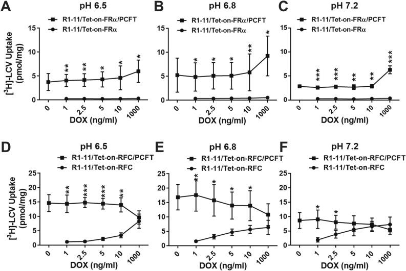3 H -LCV accumulation by R1-11/Tet-on-FRα, R1-11/Tet-on-FRα/PCFT, R1-11/Tet-on-RFC and R1-11/Tet-on-RFC/PCFT cell line models. R1-11/Tet-on-FRα, R1-11/Tet-on-FRα/PCFT, R1-11/Tet-on-RFC or R1-11/Tet-on-RFC/PCFT cells were plated in 60-mm dishes in complete FF RPMI 1640 medium containing 10% FBS for 24–48 h. The media was then replaced with complete FF RPMI 1640 medium (pH 6.5, 6.8 or 7.2) containing 10% dialyzed FBS, 25 nM [ 3 H]LCV and a range of DOX (0, 1, 2.5, 5, 10, and 1000 ng/ml). Forty-eight hours later, the dishes were washed (2×) with acid buffer (10 mM sodium acetate, 150 mM NaCl, pH 3.5; for R1-11/Tet-on-FRα or R1-11/Tet-on-FRα/PCFT cells) and 3× with ice-cold PBS. The R1-11/Tet-on-RFC and R1-11/Tet-on-RFC/PCFT cells were washed 3× with ice-cold PBS only. The washed cells were solubilized in 0.5 N NaOH and radioactive contents and protein concentrations of the alkaline cell homogenates were determined. Intracellular radioactivity was calculated in units of pmol [ 3 H]LCV per mg of cell protein. The [ 3 H]LCV uptake results are presented as mean values plus/minus SDs from at least 3 experiments for incubations at pH 6.5 ( A , D ), pH 6.8 ( B , E ) and pH 7.2 ( C , F ). Statistical significance of [ 3 H]LCV uptake values between the single and double transfectants at each DOX dosage was analyzed by an unpaired t test. An asterisk indicates a statistically significant difference between the mean values of [ 3 H]LCV accumulation by single and double transfected cells at each DOX concentration (* p