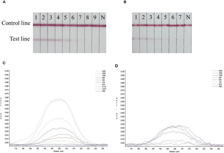 Sensitivity evaluation of the strip. (A) SARS-CoV-2 RBD protein produced in this study, 1–11: diluted positive sample ranging from 4,000 to 15.63 ng/mL by two times ratio, N: PBS negative control. (B) SARS-CoV-2 S1 protein (Sino Biological Inc.); 1–9: diluted positive sample ranging from 4,000 to 62.5 ng/mL by two times ratio, N: PBS negative control. (C,D) The colored membranes of SARS-CoV-2 RBD protein produced in this study and SARS-CoV-2 S1 protein (Sino Biological Inc.) were screened under a TSR-3000 Reader, and relative optical density (ROD) values were analyzed by AIS software.