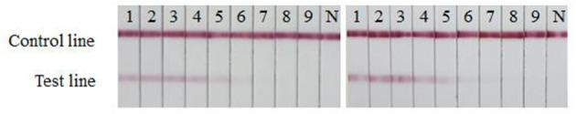 Stability evaluation of the strip. The sensitivities of fresh strips (left) and strips after 6 months of storage (right) were determined. 1–9: The SARS-CoV-2 RBD protein produced in this study diluted ranging from 4,000 to 62.5 ng/mL by two times ratio; N: PBS negative control.