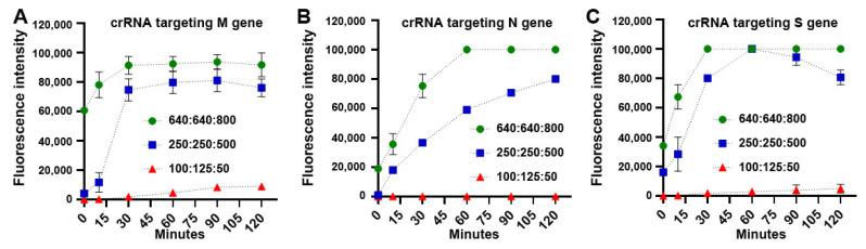 Time courses of fluorescence detection with different concentrations of LbaCas12a: crRNA: ssDNA-FQ reporter to target M ( A ), N ( B ), and S ( C ) of SARS-CoV-2, respectively. The condition of 640 nM LbaCas12a: 640 nM crRNA: 800 nM FAM quencher reporter had significantly increased fluorescence signals for quickly detecting the genes compared with the other conditions.