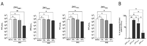 Serum stability of Zika virus (ZIKV) is affected by cell-line-dependent features. ( A ) ZIKV Insect , ZIKV A549 , ZIKV Fibro, and ZIKV Vero were incubated with increasing amounts of active or heat-inactivated human serum. ( B ) For analysis of the different viral preparations, the input virus was normalized on the amount of virus in heat-inactivated normal human serum (hiNHS). The graph shows the stability of ZIKV derived from different cells in 50%NHS. In both sets of experiments, virus-serum mixtures were incubated for 1 h at 37 °C, then diluted 10-fold, titrated on 12-well plates of overnight-plated Vero cells and incubated for 1 h before plaque agarose was overlaid. Plaques were visualized four days post infection using crystal violet staining. All assays were performed in triplicate, and the error bars show standard deviations. A 95% significance level ( p