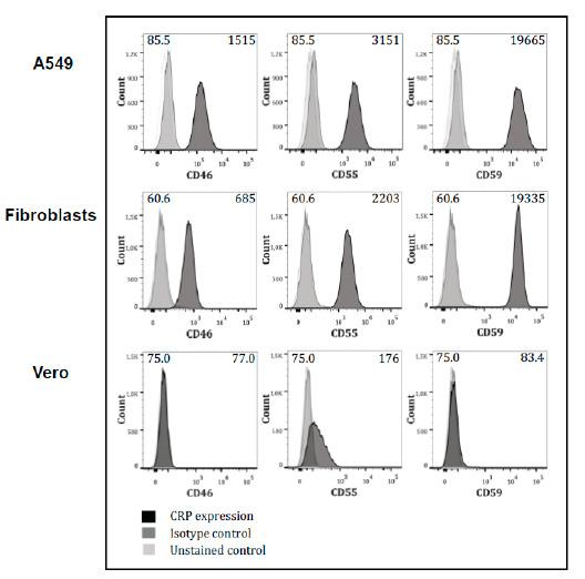 FACS analyses on <t>A549,</t> fibroblasts, and <t>Vero</t> cells for the expression of CD55, CD59, and CD46. Detection of membrane-anchored complement regulator protein (mCRP) expression on ZIKV-producing cells by FACS analysis. Cells were stained with anti-human CD46, CD55, or CD59 (dark grey histogram) or isotype-matched Ab (light gray histogram).