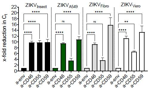 Capture ELISA indicates CD55 incorporation in ZIKV envelope. Graphs depict fold changes of RNA genome copies of captured ZIKV, analyzed by RT-PCR. Intact virions ZIKV A549 , ZIKV Insect , ZIKV Fibro , or ZIKV Vero were incubated overnight on pre-coated ELISA plates, bearing antibodies against human CD46, CD55, and CD59. ZIKV envelope served as a positive control. Isotype control was used as a negative control. After extensive washing steps, in order to remove unbound virions, ZIKV particles were lysed and RNA was extracted. The captured copy number of ZIKV genomes was characterized by determining the threshold-cycles by qPCR. Experiments were done two times in duplicates, and the error bars show standard deviations. Data were analyzed by ANOVA followed by Sidak's multiple comparisons. A 95% significance level ( p