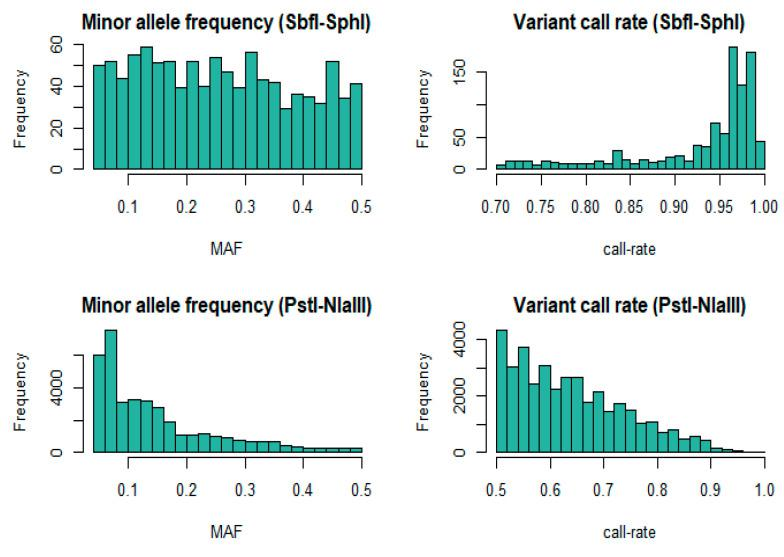 Distributions of post-filtering minor allele frequency (MAF) and single nucleotide polymorphism (SNP) call rate for SbfI-SphI ( n = 253) and the intersecting ( n = 175) animals that were also genotyped with PstI-NlaIII.