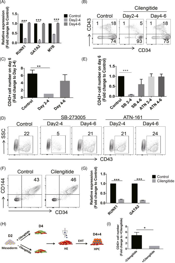 Inhibition of αvβ3 and αvβ5 integrins impairs HE development without affecting EHT. A, qRT‐PCR analysis of RUNX1 , GATA2 and MYB expression in the day 6 VTN‐coated cells treated with or without Cilengitide at Days 2‐4 or Days 4‐6. Control was normalized to 1. n = 3. B and C, Flow cytometric analysis of the frequency and number (fold change) of CD43 + cells in the day 6 VTN‐coated cells treated with or without Cilengitide at Days 2‐4 or Days 4‐6. Control was normalized to 1. n = 3. D and E, Flow cytometric analysis of the frequency and number (fold change) of CD43 + cells in the day 6 VTN‐coated cells treated with or without SB‐273005 or ATN‐161 at Days 2‐4 or Days 4‐6. Control was normalized to 1. n = 3. F, Representative flow cytometric analysis of the frequency of day 4 <t>CD34</t> + CD144 + cells treated with or without Cilengitide at Days 2‐4. n = 3. G, qRT‐PCR analysis of RUNX1 and GATA2 expression in the day 4 cells treated with or without Cilengitide at Days 2‐4. Control was normalized to 1. n = 3. H, Scheme depicting the strategy used for evaluating the haematopoietic potential of day 4 CD34 + CD144 + CD43 − CD73 − CD184 − cells treated with or without Cilengitide at Days 2‐4. The day 4 CD34 + CD144 + CD43 − CD73 − CD184 − cells treated with or without Cilengitide at Days 2‐4 were sorted and then re‐seeded on VTN‐coated plates for an additional 4 days of EHT culture for HPC generation. I, The number of CD43 + cells generated from the day 4 CD34 + CD144 + CD43 − CD73 − CD184 − cells treated with or without Cilengitide at Days 2‐4 following an additional 4 days of EHT culture. n = 3. Experiments were performed on H1 unless otherwise indicated