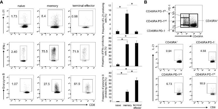The subsets of IL-21-producing CD8 + T cells. (A) PBMCs from HCs were stimulated with CD3/28 beads for 72 h. Production of IL-21, IFN-γ and granzyme B in naïve (CD45RA + CCR7 + ), memory (CD45RA - ) and terminal effector (CD45RA + CCR7 - ) cells was analyzed by intracellular staining (added PMA and Ionomycin for the last 6 h). Left panels are representative data and right graphs summarize the results (N=3). (B) PBMCs from HCs were stimulated under the same condition as (A) , and then analyzed by flow cytometry. The panel shows four fractions of CD8 + T cells (CD45RA + , CD45RA - PD-1 -/low , CD45RA - PD-1 int and CD45RA - PD-1 hi ). The panels show IL-21 production from four populations including CD45RA + , CD45RA - PD-1 -/low , CD45RA - PD-1 int and CD45RA - PD-1 hi CD8 + T cells by intracellular staining. * P