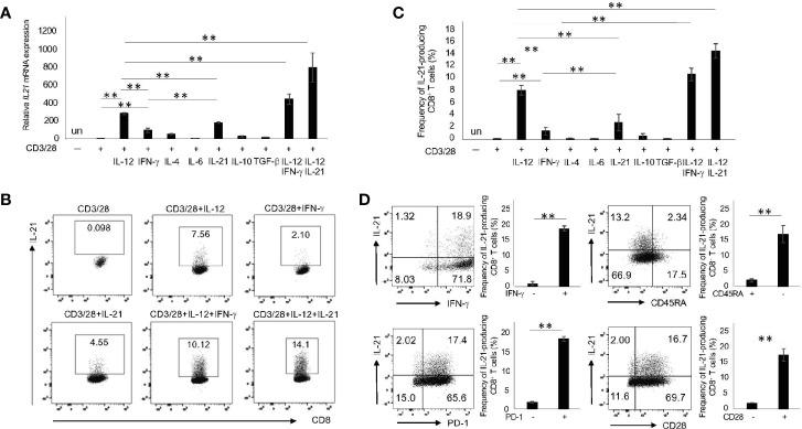 IL-21-producing CD8 + T cells are most efficiently induced by IL-12 and IL-21 in combination with CD3/28. (A) Naïve CD8 + T cells (CD45RA + CCR7 + CD8 + T cells) in HCs were purified by flow cytometry and then stimulated with the indicated cytokines in combination with CD3/28 beads for 72 h. Cells were harvested, and transcriptions of IL21 were evaluated by qPCR. (B) Purified naïve CD8 + T cells in HCs were stimulated with the indicated cytokines for 5 days, and IL-21 production was analyzed by intracellular staining. Representative data are shown and summarized results are shown in (C) (N=4). (D) Naïve CD8 + T cells in HCs were stimulated with IL-12 and IL-21 in conjunction with CD3/28 beads. The panels show expression of CD45RA, PD-1, CD28 and IFN-γ on IL-21 + and IL-21 - CD8 + T cells. Representative data are depicted, and summarized graphs of the results are shown (N=4). ** P