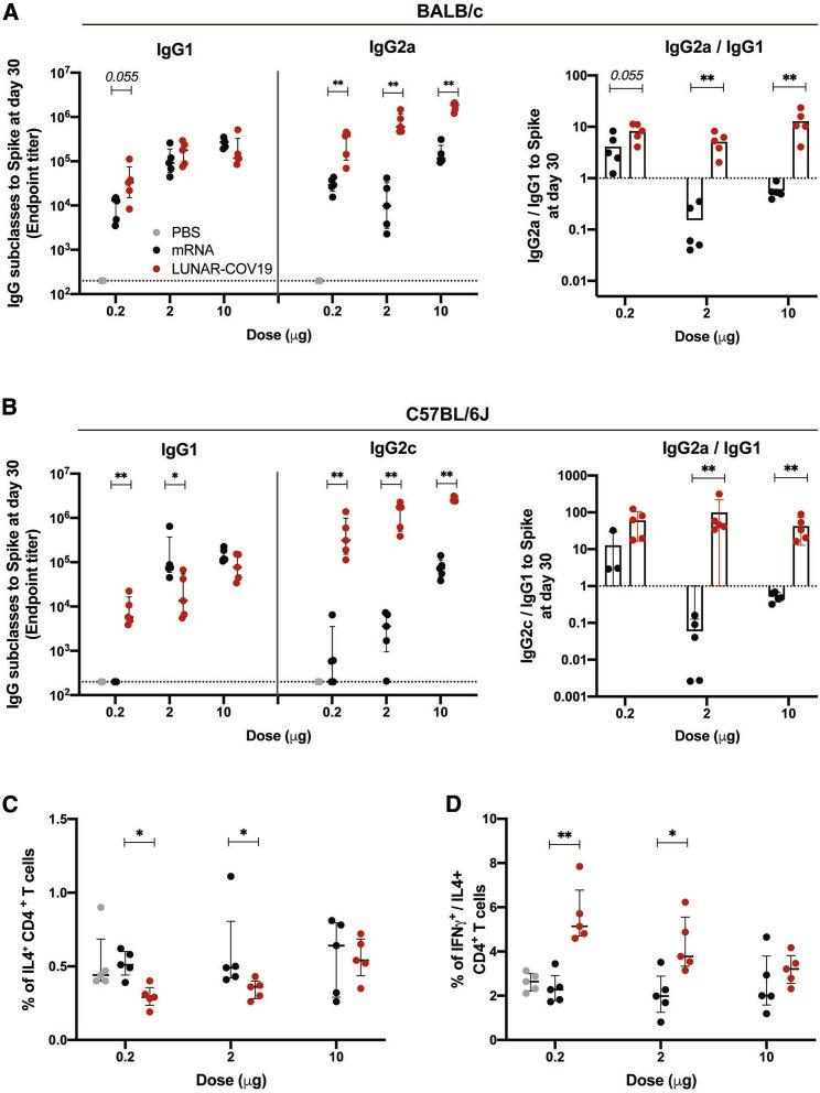 LUNAR-COV19 elicits Th1-biased immune responses (A and B) SARS-CoV-2 spike-specific IgG subclasses and the ratio of IgG2a / c/IgG1 at 30 days post-vaccination with LUNAR-COV19 compared with conventional mRNA control in BALB/c (A) and C57BL/6J (B) mice (n = 5/group). (C and D) Th2 cytokine and Th1/Th2 skew in CD4 T cells at day 7 post-vaccination in C57BL/6J mice measured by ICS as percentage of IL-4+ CD4 T cells (C) and ratio of IFNγ + /IL-4 + CD4 + T cells (D). Antibody titers and T cell data were compared between groups with a two-tailed Mann-Whitney U test; ∗0.05