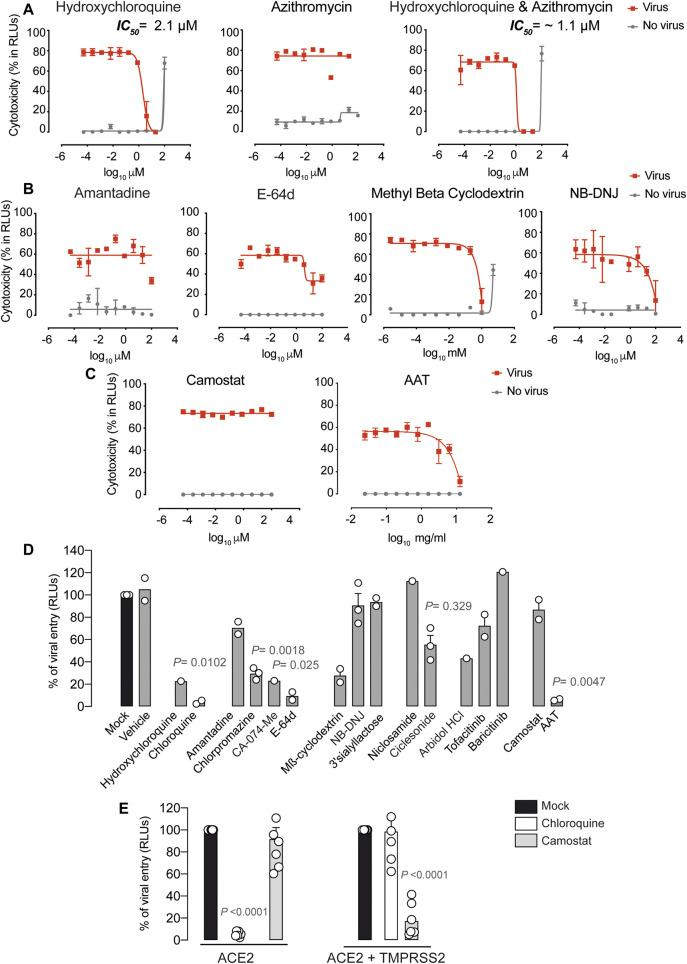 Antiviral activity of entry inhibitors against SARS-CoV-2. (A) Antiviral activity of hydroxychloroquine and azithromycin. Cytopathic effect on Vero E6 cells exposed to a fixed concentration of SARS-CoV-2 in the presence of increasing concentrations of hydroxychloroquine, azithromycin, and their combination. Drugs were used at a concentration ranging from 0.0512 nM to 100 µM. When combined, each drug was added at the same concentration. Non-linear fit to a variable response curve from one representative experiment with two replicates is shown (red lines), excluding data from drug concentrations with associated toxicity. The particular IC 50 value of this graph is indicated. Cytotoxic effect on Vero E6 cells exposed to increasing concentrations of drugs in the absence of virus is also shown (grey lines). (B) Cytopathic effect on Vero E6 cells exposed to a fixed concentration of SARS-CoV-2 in the presence of increasing concentrations of amantadine, a clathrin-mediated endocytosis inhibitor, E-64d, a pan-cathepsin inhibitor acting downstream once viruses are internalized in endosomes, NB-DNJ, an inhibitor of ganglioside biosynthesis and methyl-β-cyclodextrin, a cholesterol-depleting agent. All drugs were used at a concentration ranging from 0.0512 nM to 100 µM aside from methyl-β-cyclodextrin, which was used 10 times more concentrated. Non-linear fit to a variable response curve from one experiment with two replicates is shown (red lines). Cytotoxic effect on Vero E6 cells exposed to increasing concentrations of drugs in the absence of virus is also shown (grey lines). (C) Cytopathic effect on Vero E6 cells exposed to a fixed concentration of SARS-CoV-2 in the presence of increasing concentrations of camostat, a TMPRSS2 inhibitor, and ATT, an alpha-1 antyitrypsin, a broad cellular protease inhibitor, as described in (A) . (D) Effect of entry inhibitors on luciferase expression of reporter lentiviruses pseudotyped with SARS-CoV-2 Spike in ACE2 expressing HEK-293T cells. 