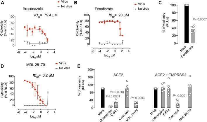 Antiviral activity of inhibitors with unknown mechanism of action. (A) . Cytopathic effect on Vero E6 cells exposed to a fixed concentration of SARS-CoV-2 in the presence of increasing concentrations of Itraconazole. Drug was used at a concentration ranging from 0.0512 nM to 100 µ. Non-linear fit to a variable response curve from one representative experiment with two replicates is shown (red lines), excluding data from drug concentrations with associated toxicity. The particular IC 50 value of this graph is indicated. Cytotoxic effect on Vero E6 cells exposed to increasing concentrations of drugs in the absence of virus is also shown (grey lines). (B) . Cytopathic effect on Vero E6 cells exposed to a fixed concentration of SARS-CoV-2 in the presence of increasing concentrations of Fenofibrate, as detailed in (A) . (C) . Effect of fenofibrate on the entry of luciferase expressing lentiviruses pseudotyped with SARS-CoV-2 Spike in ACE2-expressing HEK-293T cells. Values are normalized to luciferase expression by mock-treated cells set at 100%. Mean and s.e.m. from two experiments with two replicates. Statistical deviations from 100% were assessed with a one sample t test. (D) . Cytopathic effect on Vero E6 cells exposed to a fixed concentration of SARS-CoV-2 in the presence of increasing concentrations of MDL 28170, as detailed in (A) . (E) . Comparison of MDL 28170 activity with entry inhibitors blocking viral endocytosis, such as chloroquine and E-64d, and inhibitors blocking serine protease TMPRSS2, such as camostat. ACE2 expressing HEK-293T cells transfected or not with TMPRSS2 were exposed to SARS-CoV-2 Spike lentiviruses in the presence of these compounds. Values are normalized to luciferase expression by mock-treated cells set at 100%. Mean and s.e.m. from at least two experiments with two replicates. Statistical deviations from 100% were assessed with a one sample t test.