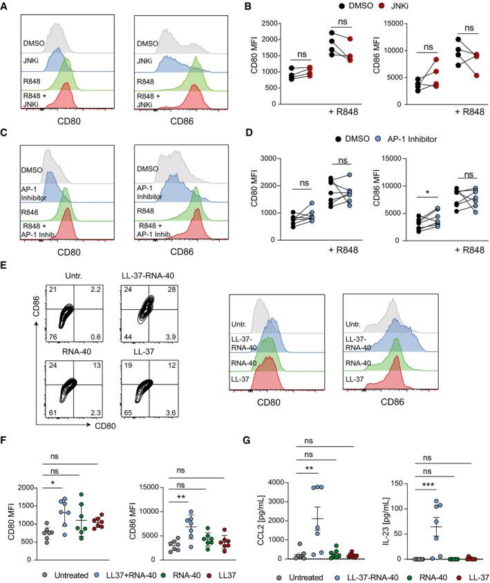 Role of JNK‐AP‐1 signaling in the maturation of human mo‐DCs stimulated with R848 or LL‐37‐RNA‐40 Human mo‐DCs were pretreated with DMSO (1:1,000) or JNK Inhibitor (SP600125, 25 µM) (A, B) or AP‐1 Inhibitor (T‐5224, 20 µM) (C, D) for 1 h and stimulated with R848 for 24 h. Gated CD1a + cells were analyzed for surface expression of CD80 and CD86 by flow cytometry. Shown are representative histograms (A, C) and mean fluorescence intensity (MFI) (B, D) ( n = 4 (B); representative result from 2 independent experiments is shown, n = 7 (D); 2 independent experiments). Human mo‐DCs were stimulated with LL‐37‐RNA‐40 complex or LL‐37 or RNA‐40 for 24 h. Representative flow cytometry plots and histograms are shown in (E) and mean fluorescence intensity (MFI) of CD80 and C86 is shown in (F). Expression of CCL2 and IL‐23 was analyzed by ELISA (G) ( n = 7, 2 independent experiments). Data information: Data are shown as mean ± SEM. P ‐values were calculated by paired, two‐tailed t ‐test (B, D) or one‐way ANOVA with Tukey multiple comparison test (F, G). Statistical significance: ns > 0.05, * P