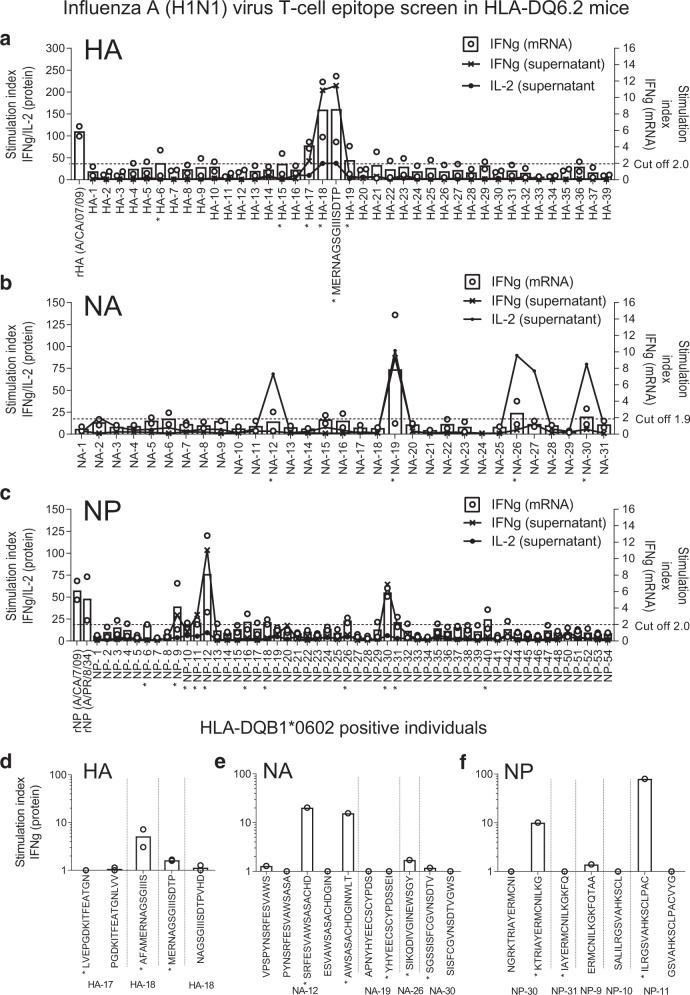 Influenza A H1N1 virus T-cell epitope screen in HLA-DQ6.2 mice, and Pandemrix-vaccinated HLA-DQB1*0602 positive individuals. Spleen cells from Pandemrix-immunized HLA-DQ6.2 mice were stimulated in culture with pools of five overlapping 15-mer peptides each, covering a hemagglutinin (HA), b neuraminidase (NA) or c nucleoprotein (NP) from influenza (A/reassortant/NYMC X-179A (California/07/2009 × NYMC X-157)(H1N1)) vaccine virus used in Pandemrix (pooling cells from 2 × 2 mice, n = 2). Recombinant hemagglutinin (rHA) and nucleoprotein (rNP; A/Puerto Rico/8/34 corresponding to the Pandemrix vaccine strain) were used as positive controls. d – f PBMC from Pandemrix-vaccinated HLA-DQB1*0602 positive individuals (sleep clinic patients without a diagnosis of NT1) were stimulated in culture with single 15-mer peptides, derived from the same vaccine virus strain ( n = 1–2). The expression of IFN-γ or IL-2 was measured by FMIA (protein) or RT-qPCR (mRNA). Results are expressed as ratios between cytokine concentrations (lines representing means) or relative gene expressions (dots representing single values, bars representing means) measured in peptide-stimulated and negative control samples (stimulation index). An asterisk (*) indicates a pool or single peptide that was selected for further testing.