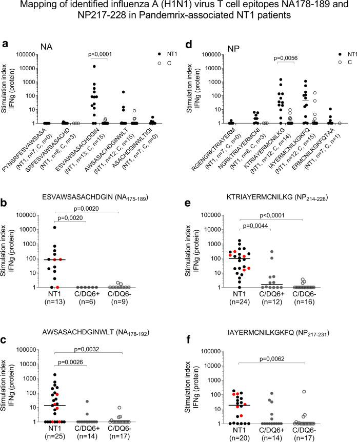 Mapping of identified influenza A H1N1 virus T-cell epitopes in Pandemrix-associated NT1 patients. a , d PBMC from pediatric Pandemrix-associated NT1 patients (NT1; validation cohort) or pediatric Pandemrix-vaccinated healthy controls (C) were stimulated in culture with overlapping 15-mer peptides from influenza (A/reassortant/NYMC X-179A (California/07/2009 × NYMC X-157)(H1N1)) vaccine virus neuraminidase (NA) or nucleoprotein (NP), as indicated. b , c , e , f PBMC from NT1 patients (invariably HLA-DQB1*0602 positive; discovery and validation cohorts combined; HLA-DQB1*0602 homozygous NT1 patients marked with red dots) or HLA-DQB1*0602 positive (C/DQ6+) or negative (C/DQ6−) healthy controls were stimulated with single NA- or NP-derived peptides. The secretion of IFN-γ was measured by FMIA (protein). Results are expressed as the ratio between cytokine concentrations measured in peptide-stimulated and negative control samples (stimulation index). Statistical comparisons between groups were performed, using Kruskal–Wallis and Dunn's multiple comparisons tests.