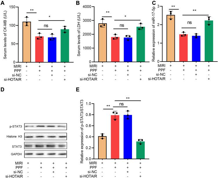 The effects of HOTAIR on the protective function of PPF in MIRI rats. ( A ) CK-MB in the serum of the rats in each group was detected with ELISA (N=3). ( B ) LDH in the serum of the rats in each group was detected with ELISA (N=3). ( C ) The expression level of miR-17-5p in the myocardial tissue of rats was detected by qRT-PCR (N=3). ( D and E ) Western blot was used to detect the expressions of STAT3 and p-STAT3 protein in cardiac tissue of the rats (N=3). * P