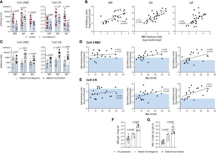 Quantification of the relative levels of IgM, IgG, and IgA-reactive SARS-CoV-2-RBD and N antibodies from acute and convalescent SARS-CoV-2 infected subjects. (A) Arbitrary Units (AUs) of SARS-CoV-2 RBD and N reactive IgM, IgG, and IgA of acute and convalescent subjects. Open and solid symbols represent negative and positive results, respectively, as determined by our Metric 1 described in Methods. (B) Correlation between SARS-CoV-2 RBD and N IgM, IgG, and IgA log transformed AUs. Values were log-transformed to obtain a parametric distribution. (C) Quantification of SARS-CoV-2 RBD and N reactive IgM, IgG, and IgA of acute subjects regrouped based on results from Abbott's SARS-CoV-2 IgG CMIA. Correlation between SARS-CoV-2 RBD (D) and N (E) IgM, IgG, and IgA AUs (log transformed) with the number of days post symptom (dps) onset at time of sample collection for acute subjects. Quantification of SARS-CoV-2 RBD reactive IgM and N reactive IgA (F) and RBD N reactive for IgM, IgG, and IgA (G) for pre-pandemics (n = 19) and Acutes re-classified based on Abbott test results. Light blue bars depict AU range of pre-pandemics for each respective antigen and isotype. Statistical analyses were performed using an unpaired non-parametric Mann-Whitney t-test in (A, C, F, G) and Pearson's correlation of normally distributed log transformed AU values in (B, D, E) dps, days post symptom.