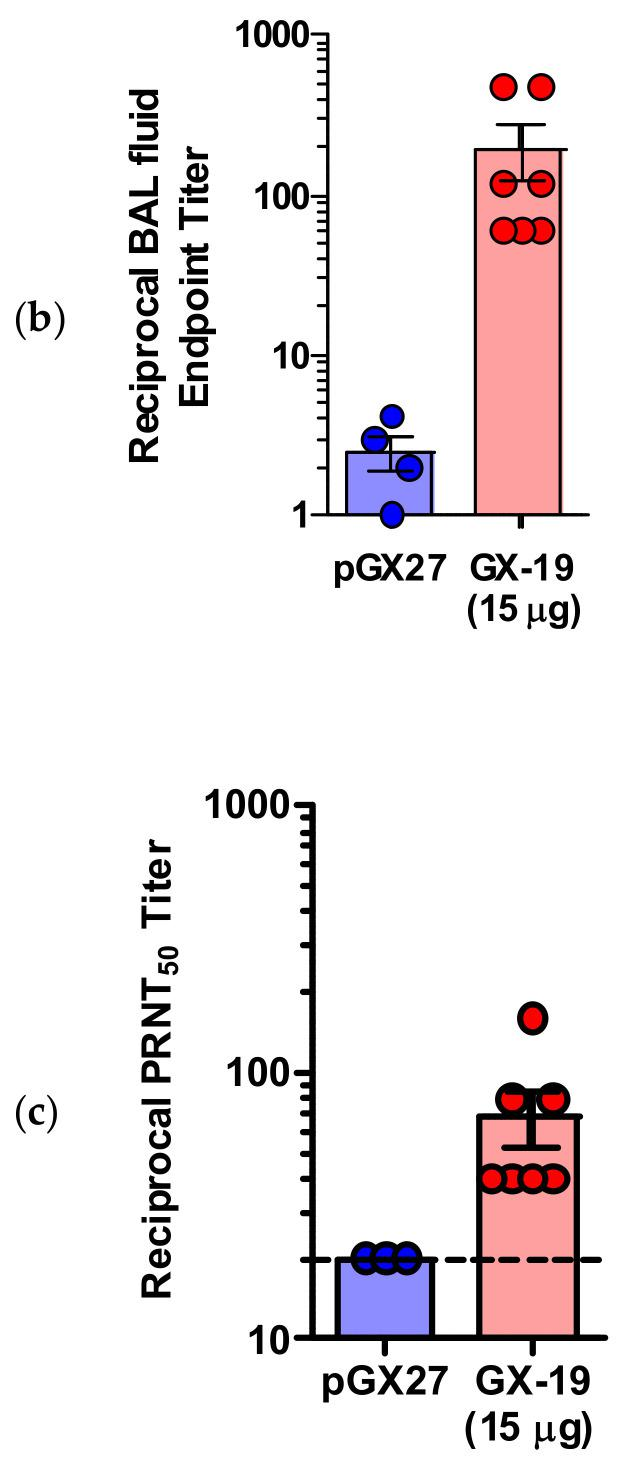 GX-19 elicits robust binding and neutralizing antibody responses in mice. BALB/c mice ( n = 4–7/group) were immunized at weeks 0 and 2 with indicated doses of GX-19 or pGX27 as described in the Methods ( a – c ). Sera were collected at 2 weeks post-prime (blue) and 2 weeks post-boost (red) and assessed for SARS-CoV-2 S-specific IgG antibodies by ELISA ( a ), and for post-boost sera, neutralizing antibodies against SARS-CoV-2 live virus ( c ). Bronchoalveolar lavages (BALs) were collected at 2 weeks post-boost and assayed for SARS-CoV-2 S-specific IgG antibodies by ELISA ( b ). Data representative of two independent experiments. All data are represented as individual values. * p