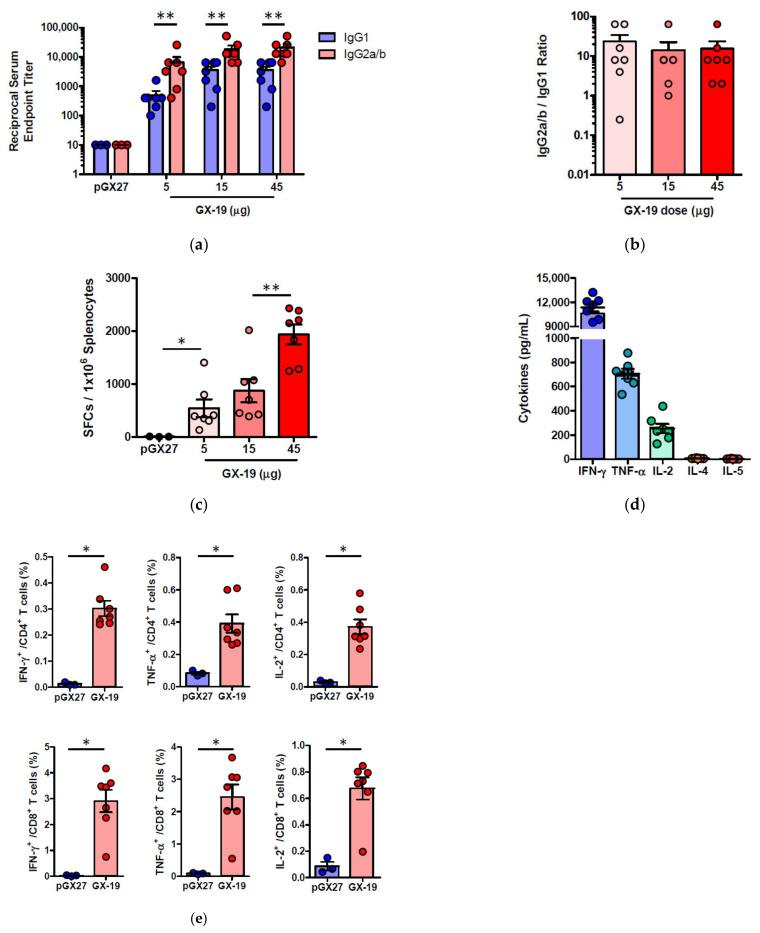 Immunization with GX-19 elicits Th1-biased T cell responses in mice. BALB/c mice ( n = 3–7/group) were immunized at weeks 0 and 2 with indicated doses of GX-19 or pGX27 (empty control vector) as described in the Methods ( a – c ). Sera were collected at 2 weeks post-boost and assessed for SARS-CoV-2 S-specific IgG1 and IgG2a/b. Endpoint titers ( a ), and endpoint tier ratios of IgG2a/b to IgG1 ( b ) were calculated. At 2 weeks post-boost, mouse splenocytes were isolated and re-stimulated with peptide pools spanning the SARS-CoV-2 S protein ex vivo. Indicated cytokines in the supernatants of culture were quantified using a Th1/Th2 cytometric bead array kit. Mean value of the medium alone background (mean ± s.d., pg ml −1 ) was 19.17 ± 8.61 for IFN- γ , 57.12 ± 6.53 for TNF-α, 33.10 ± 6.72 for IL-2, 7.83 ± 0.45 for IL-4, and 4.66 ± 0.13 for IL-5 ( d ). T cell responses were measured by IFN- γ ELISPOT in splenocytes stimulated with peptide pools spanning the SARS-CoV-2 S protein. Shown are spot-forming cells (SFC) per 10 6 splenocytes ( c ). Cells were stained for intracellular production of IFN- γ , TNF-α, and IL-2. Shown are the frequency of S-specific CD4 + or CD8 + T cells after subtraction of background (DMSO vehicle, Sigma-Aldrich, St. Louis, MO, USA) ( e ). Data representative of two independent experiments. All data are represented as individual values. * p