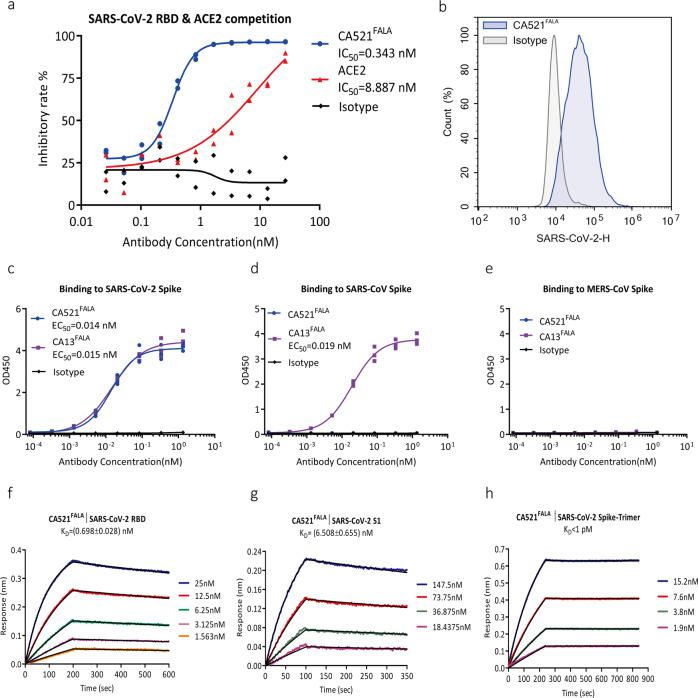 CA521 FALA can block the binding of SARS-CoV-2-RBD to hACE2 receptor and specifically bind Spike of SARS-CoV-2. a CA521 FALA can effectively block RBD binding to ACE2 receptor in ELISA. CA521 FALA and hACE2 protein can block the binding of SARS-CoV-2 RBD and hACE2 with IC50 of 0.343 and 8.887 nM, respectively. Experiments were performed in duplicate, value = mean ± SD. b CA521 FALA could specifically bind to CHO-K1 cells expressing SARS-CoV-2 Spike. SARS-CoV-2 Spike protein transfected CHO-K1 cells were stained with isotype control, CA521 FALA at a concentration of 0.74 μg/mL. FITC-anti-HuFc secondary antibody was used for flow cytometry. Irrelevant mAb with the same constant region of CA521 FALA was used as an isotype. Experiments were performed in triplicate and one representative data was displayed. c – e CA521 FALA could specifically bind to SARS-CoV-2 Spike protein, but does not cross-react with SARS-CoV Spike or MERS-CoV Spike protein in Elisa. CA521 FALA binds SARS-CoV-2 Spike protein with EC50 of 0.014 nM. CA13, which is an anti- SARS-CoV-2 S2 domain mAb, can bind Spike of SARS-CoV-2 and SARS-CoV with EC50 of 0.015 and 0.019 nM. Experiments were performed in triplicate, value = Mean ± SD. f – h The binding kinetics of CA521 FALA were assessed by biolayer Interferometry (BLI) assay using the Octet RED96 system (FortéBio). Trimer protein is from Shuimu BioSciences. Experiments were performed three times and one representative data was displayed.