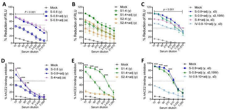 Adjuvanted S and S1 immune sera exhibit high titers of <t>SARS-CoV-2</t> pseudovirus neutralization and receptor binding inhibition activities. ( A – C ) Reduction percentage (%) in relative luminometer units (RLU) as a measure of luciferase activity for SARS-CoV-2 spike pseudotyped lentivirus infection in HEK293 cells expressing human ACE2 receptor. Data were obtained from pooled sera ( n = 6 to 8) with triplicate wells. S-0.8 (y): S 0.8 µg boost sera of young adult mice, S-0.8 + adj (y): S 0.8 µg + adjuvant boost sera of young adult mice, S-0.8 + adj (a): S 0.8 µg + adjuvant boost sera of old aged mice, S1-4 (y): S1 4 µg boost immune sera of young adult mice, S1-4 + adj (y): S1 4 µg + adjuvant boost immune sera of young adult mice, S2-4 (y): S2 4 µg boost immune sera of young adult mice, S2-4 + adj (y): S2 4 µg + adjuvant boost immune sera of young adult mice, S-0.8 + adj (y, x3): S 0.8 µg + adjuvant 2nd boost immune sera of young adult mice, S-0.8 + adj (y, x3, 19W): S 0.8 µg + adjuvant immune sera collected at week 19 post 2nd boost of young adult mice, S-4 + adj (a, x3): S 4 µg + adjuvant 2nd boost sera of old aged mice. IV-0.8-10 + adj (y, x3): inactivated adjuvanted SARS-CoV-2 vaccination in young age mice (prime 0.8 µg of heat-inactivated and gamma-irradiated virus, 2 times boost with 10 µg inactivated adjuvanted SARS-CoV-2 of heat-inactivated and gamma-irradiated virus). Adj: adjuvants (MPL + QS-21, 1 µg + 10 µg). Mock: sera from mice with adjuvant (MPL + QS-21, 1 + 10 µg) only. ( D – F ) ACE2 receptor binding inhibition titers in pooled immune sera ( n = 6–8) with triplicate wells. Inhibition percentage (%) of hACE2 binding to RBD was measured after incubation with serially diluted immune sera in the plate precoated with hACE2 protein. Immune sera of groups are the same as in ( A – C ). Statistical significance was calculated using two-way ANOVA and a Bonferroni's multiple-comparison test. Error bars indicate the mean ± SEM. **; p